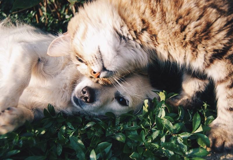 12 ยากำจัดเห็บ หมัด ยี่ห้อไหนดี เพื่อสัตว์เลี้ยงสุขภาพดี ได้ผลจริง