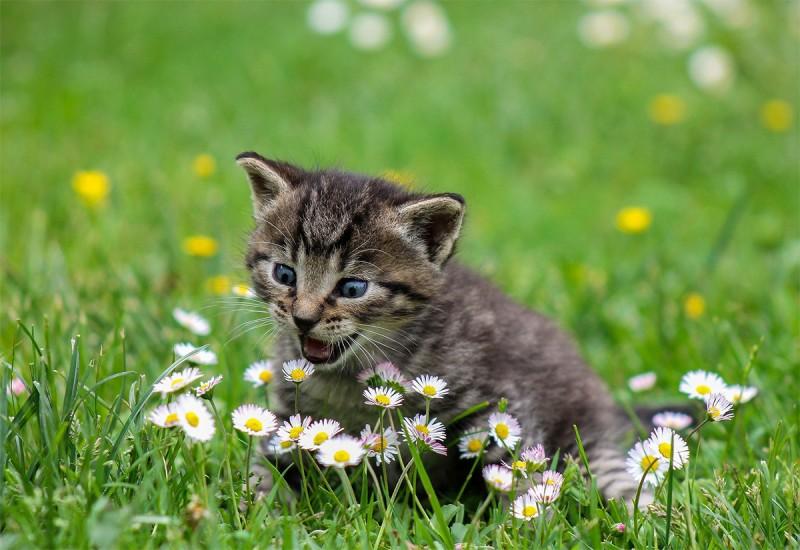 12 อาหารแมว ยี่ห้อไหนดี 2021