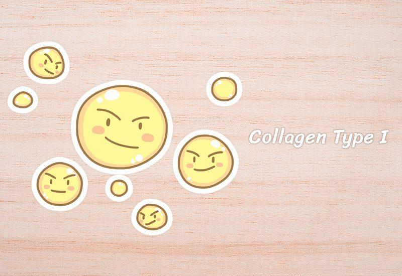 Collagen Type I