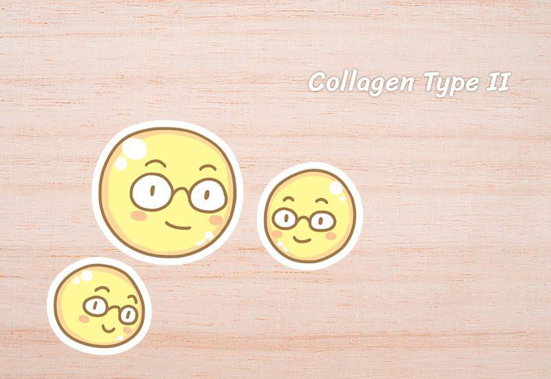 Collagen Type II