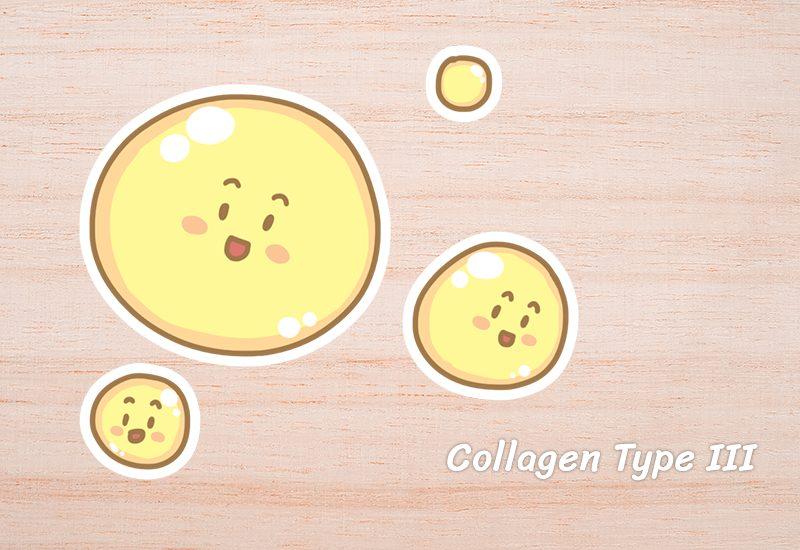 Collagen Type III