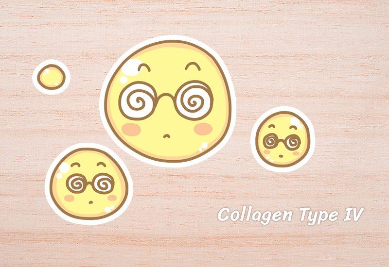 Collagen Type IV
