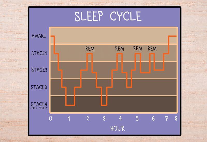 วงจรการนอนหลับ (Sleep Cycle)