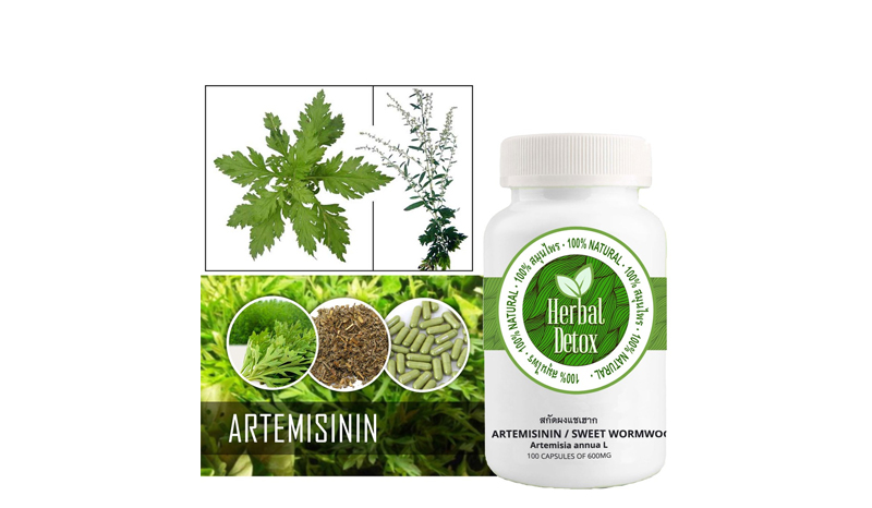 >HDTโกฐจุฬาลัมพา / ชิงเฮา สกัดผง/แซเฮาก Artemisia annua L 100%