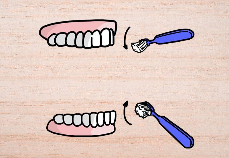 ปัดฟันบน ฟันล่าง